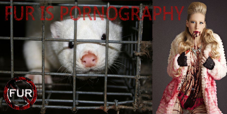 fur is pornography2WEB
